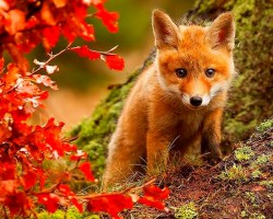 Ja jestem rudy?!To jesień!!!