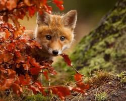 Hej,ludzie!Jakieś smakołyki,czy coś w tym stylu macie?Idzie jesień,a w spiżarni pustka...:)