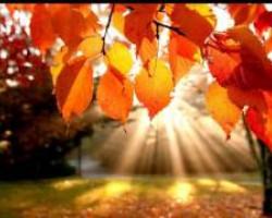 Patricia Kaas - Autumn Leaves