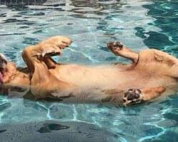 """Ni pies, ni wydra...Pytanie brzmi:jak wygląda styl pływania """"pieskiem""""?"""